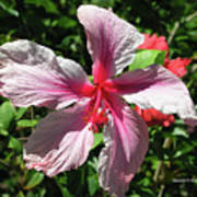 F5 Hibiscus Flower Hawaii Poster