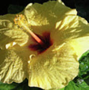 F9 Yellow Hibiscus Poster