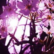 Fairy Flower Poster