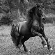 Fairy Tale Stallion Leaps Poster