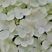 Fairy White Flowers Poster