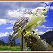 Falcon Being Trained H B With Decorative Ornate Printed Frame. Poster