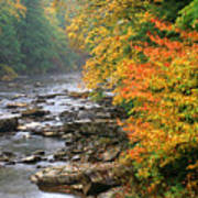 Fall Along The Cranberry River Poster by Thomas R Fletcher