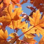 Fall Art Orange Autumn Leaves Blue Sky Baslee Troutman Poster