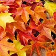 Fall Art Prints Red Orange Yellow Autumn Leaves Baslee Troutman Poster