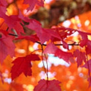 Fall Art Red Autumn Leaves Orange Fall Trees Baslee Troutman Poster