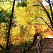 Fall At Lincoln Lake Poster