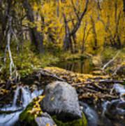 Fall At Mcgee Creek Poster
