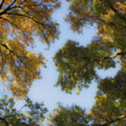 Fall Canopy In Virginia Poster