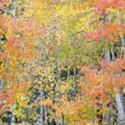 Fall Color At North Lake Poster