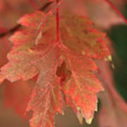 Fall Color In Softness Poster