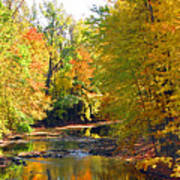 Fall Color On Creek  5597 Poster