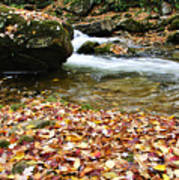Fall Color Rushing Stream Poster