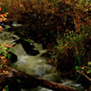 Fall Color Stream Poster