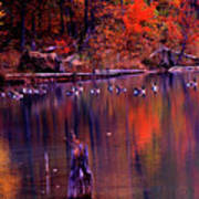 Fall Colors And Geese Poster