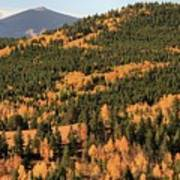Fall Colors At Rocky Mountain National Park Poster