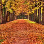 Fall Colors Avenue Poster