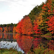 Fall Colors In Madbury Nh Poster