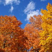 Fall Colors In Spokane Poster