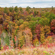 Fall Colors On Hillside Poster