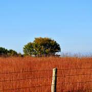 Fall Field Poster