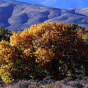 Fall Foliage And Hills, Carson City Poster