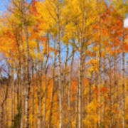 Fall Foliage Color Vertical Image Orton Poster
