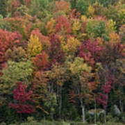 Fall Foliage In The Adirondack Mountains - New York Poster by Brendan Reals