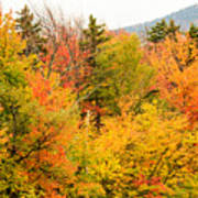 Fall Foliage In The Mountains Poster