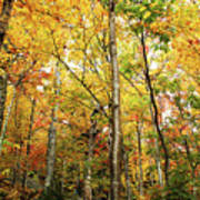 Fall Foliage On The Hike Up Mount Monadnock New Hampshire Poster