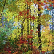 Fall Forest Poster