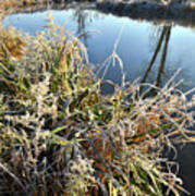 Fall Frost On Grasses Along Nippersink Creek Poster