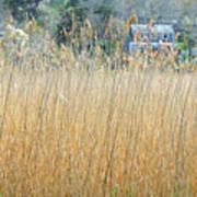 Fall Grass Poster