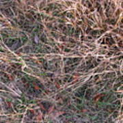 Fall Grasses Poster