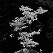 Fall Illumination In B/w Poster