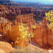 Fall In Bryce Canyon Poster