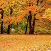 Fall In Lindstrom Poster
