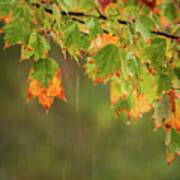 Fall-ing Rain Square Poster
