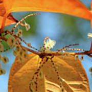 Fall Jewels Poster