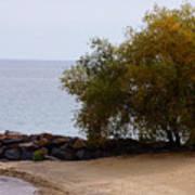 Fall Lake Tree Poster