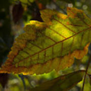 Fall Leaf 2010 Poster