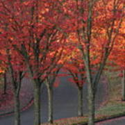 Fall Leaves Along A Curved Road Poster