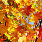 Fall Leaves Background Poster by Carlos Caetano