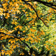 Fall Leaves In The Smokies Poster