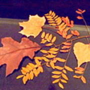 Fall Leaves On Granite Counter Poster