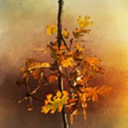 Fall Oak Leaves Poster