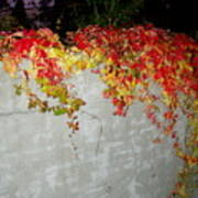 Fall On The Wall Poster