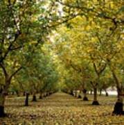 Fall Orchard Poster