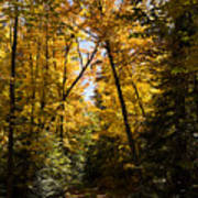 Fall Path In Golden Yellow Poster