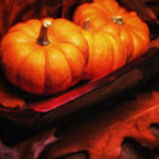 Fall Pumpkins Still Life Poster